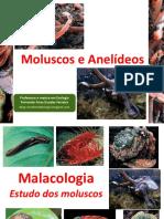 Aula BIO - Zoologia_Moluscos e Anelídeos