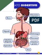 El Aparato Digestivo Lámina Recursosep