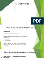 tumores-genitales-_1_