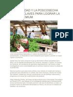 La Inocuidad y La Poscosecha Son Las Claves Para Lograr La Mora Premium