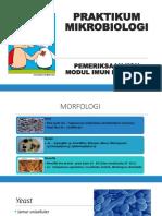 Praktikum Mikrobiologi Koh