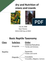 Lizard Turtle Present