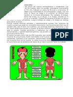 Músculos, Huesos y Articulaciones Con Explicación