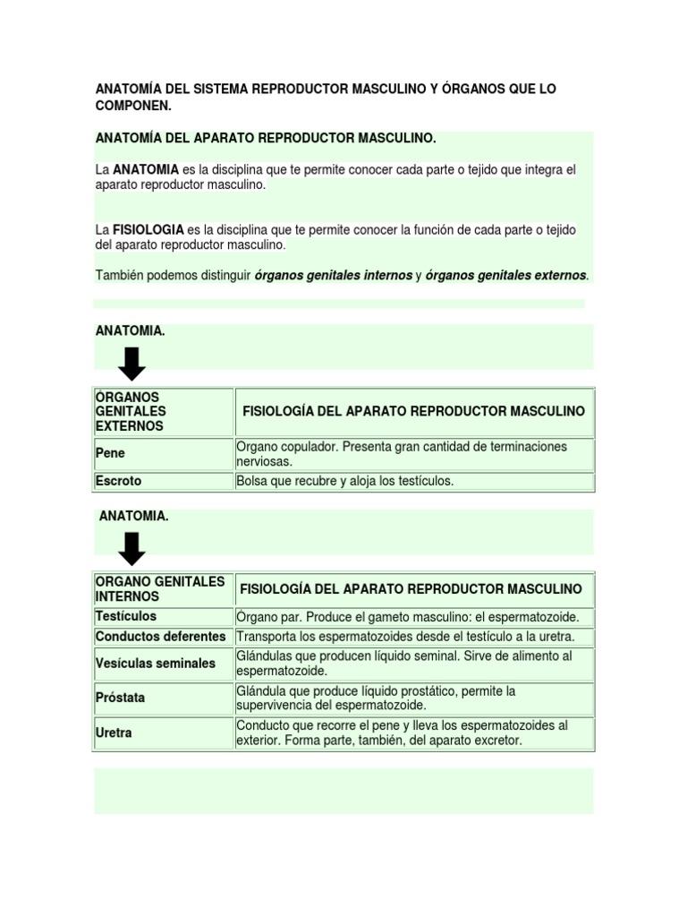 Anatomia Del Sistema Reproductor Masculino..!