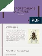 Miasis Por Stomoxys Calcitrans