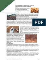 Boas Práticas Na Preparação, Plantio e Pós Plantio de Aipim Manteiga v.2.0
