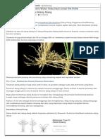 Klasifikasi dan Morfologi Alang Alang – Infomasi Ilmu Pertanian Indonesia.pdf