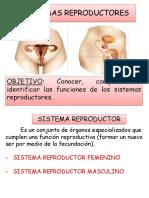 ppt sistema reproductor