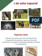 5 Especies Valor Especial - Vero Quiroga