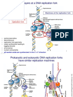 Biology of transcription and replication