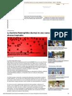 La Bacteria Haemophilus Ducreyi Es Una Causa Emergente de Úlceras Tropicales - Noticia - IsGLOBAL
