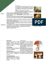 reino-fungi-autoguardado2
