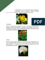 Plantas Acuaticas - 2018