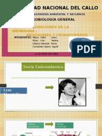 INVAGINACIONES DE LA MEMBRANA(MESOSOMAS Y CROMATOFOROS).pptx