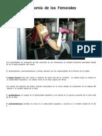 Anatomía Del Femoral