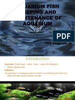 Joe Shalini - Aquarium Fish