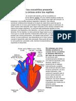 El Corazón de Los Cocodrilos Presenta Características