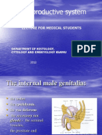 Male Reproductive System LECTURE for Medical Students 2012