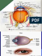 Semiologia Ojos