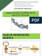 Núcleo celular. Bioquímica.
