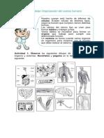 Guia de trabajo Organizacion del cuerpo humano.docx