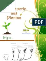 O transporte nas plantas