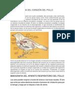 Bibliografia Del Corazón Del Pollo