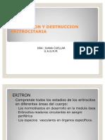 61539398 Tema 02 Produccion y Destruccion Eritrocitaria