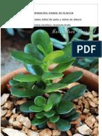 Mi Planta Jade