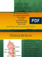 ANATOMI-TENGGOROK