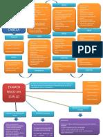 Mapa Examen Fisico Regional Cabeza, Cuello y Extremidades