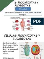 Células Eucariotas y Procariotas