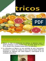 citricos 2