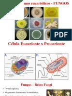 Célula Eucariota - Fungos