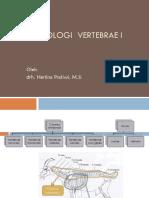 Vertebrae-cervicalis-thorax.pdf