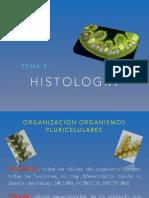 T-3.1 Histologia Vegetal
