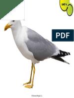 5c089 Seagull