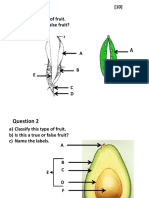 Fruit Pract Test