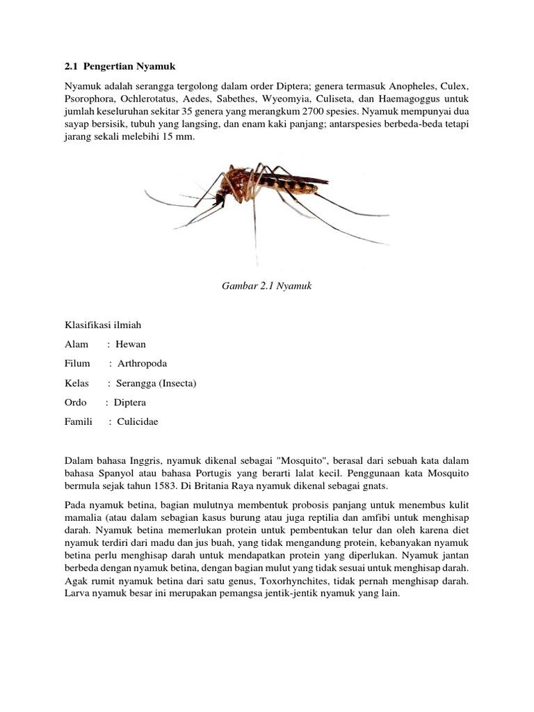 86+ Gambar Hewan Dan Tahap Pertumbuhannya Keterangan Nyamuk HD Terbaik