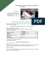 Descripcion-Petrografica-de-Seccion-Delgada.docx