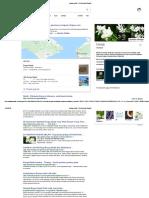 Bunga Melati - Penelusuran Google