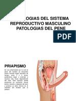 PATOLOGIAS DEL SISTEMA REPRODUCTIVO MASCULINO.pptx