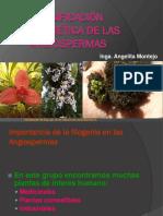 5. Filogenia de Angiospermas 2018-1