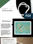 Ascaris lumbricoides2.pptx