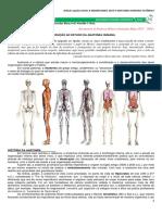 Medresumos 2014 - Anatomia Humana Sistêmica 01 - Introdução