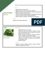 Fichas de árboles