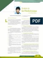 41. Efecto de Las Fitohormonas