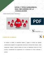 Sangre. Grupos y Tipos Sanguíneos. Hemostasia. Mecanismo de La Coagulación