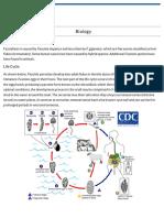 CDC - Fasciola - Biology
