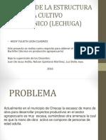 Producción de Lechuga Hidroponica
